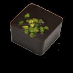 PISTACHE : Praliné aux amandes parfumé à la pistache enrobé de chocolat noir